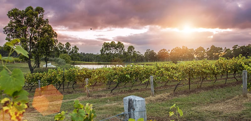 wine tasting in hunter valley with sun setting over vineyard in background