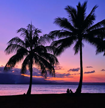 people sitting under palm trees at sunset in Port Douglas, Queensland, Australia