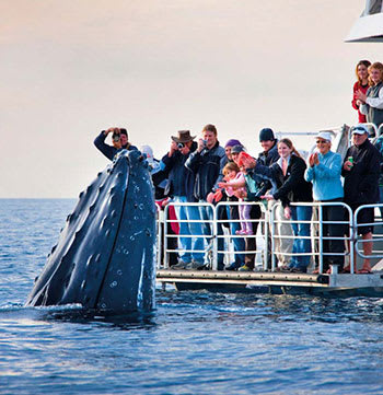 boat with people whale watching in Redcliffe Queensland Australia
