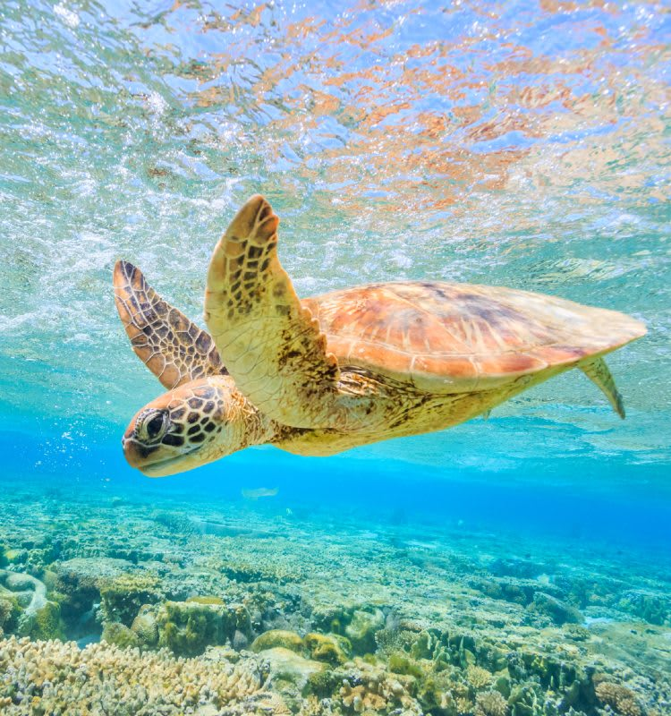 Stay at our brand new hotel Oaks Cairns Hotels and enjoy quick access to memorable experiences at the Great Barrier Reef.