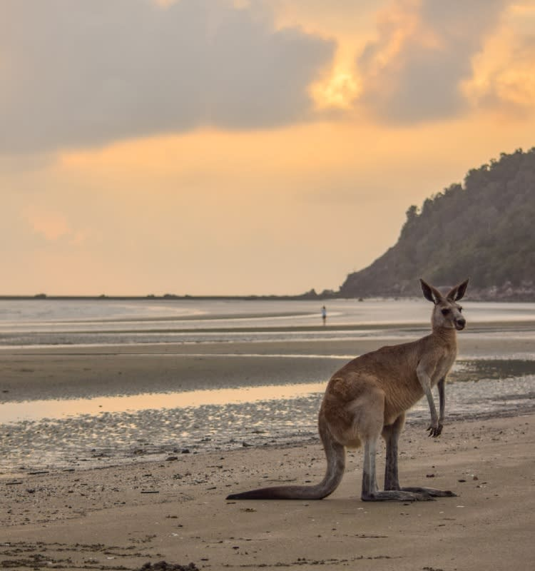 Your stay at Oaks Mackay Rivermarque Hotels offers you close proximity to the Mackay's Cape Hillsborough Beach, and, views of the resident kangaroos and wallabies on the shore.