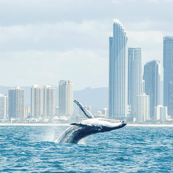 Whale Watching Cruise from Sea World on the Gold Coast Australia