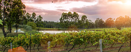 vineyard in Hunter Valley at sunset