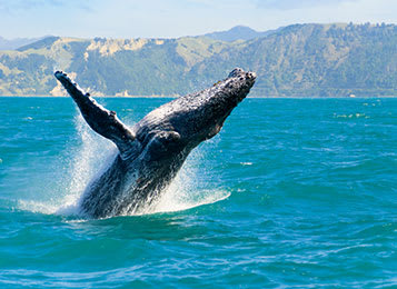 Where To Watch The Whales This Winter